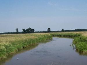 Mata río Snake