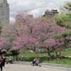 Central Park Movie Sites Walking Tour