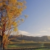 2-Day Hunter Valley and Port Stephens Small-Group Eco-Tour