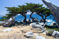 2-Day Monterey, Carmel and Pebble Beach Tour from San Francisco  Photos
