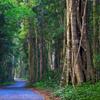 2-Day O'Reilly's Lamington National Park Tour