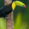3-Day Amazon Jungle Tour at Posada Amazonas