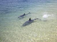 3-Day Monkey Mia Dolphins, Pinnacles Desert and Kalbarri National Park Tour from Perth Photos