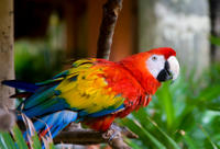 3-Night Ecuadorian Amazon Tour from Quito with Accommodation at the Yachana Lodge Photos