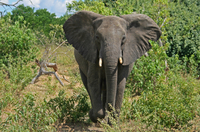 5-Day Victoria Falls and Chobe National Park Tour with Round-Trip Flight from Johannesburg Photos