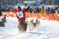 7-Day Winter Alaska Experience: Anchorage and Iditarod Trail Sled Dog Race Photos