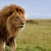 7-Night Small-Group Kenya Safari from Nairobi: Great Rift Valley Including Masai Mara