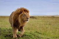 7-Night Small-Group Kenya Safari from Nairobi: Great Rift Valley Including Masai Mara