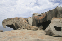 Adelaide Super Saver: Kangaroo Island Tour Plus Adelaide City Sightseeing Photos