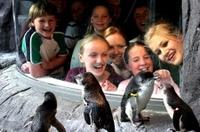 Akaroa Shore Excursion: Banks Peninsula, Christchurch City Tour and the International Antarctic Centre Photos
