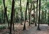 Auckland Shore Excursion: Small-Group Coast and Rainforest Tour