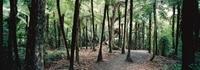 Auckland Shore Excursion: Small-Group Coast and Rainforest Tour Photos