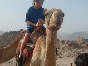 Camel Safari with Optional Bedouin Dinner Photos