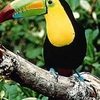 Belize City Tour and Belize Zoo