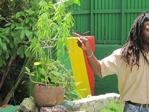 Bob Marley Reggae Explosion Photos