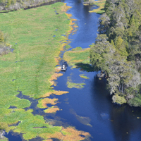Busch Gardens and Alafia River Wildlife Helicopter Tour Photos