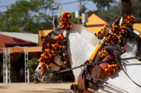 Cadiz Shore Excursion: Small-Group Cadiz Sightseeing Tour, Jerez Horse Show and Sherry Tasting Photos