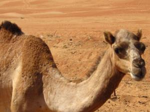 Private 4x4 Desert and Wadi Safari - Wahiba and Wadi Bani Khalid Photos