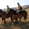 Christchurch Horse Trekking