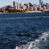 High-Speed Passenger Ferry From Victoria, British Columbia to Seattle, Washington