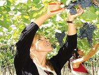 Deluxe Mendoza Half-Day Wine Tasting Tour Photos