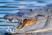 Eco-Adventure in Goa: Crocodile Watching and Bird Spotting with Buffet Lunch Photos