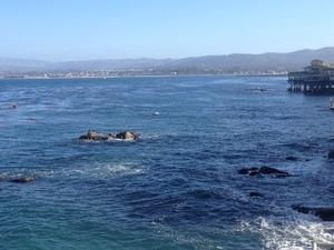 Monterey Bay Aquarium Admission Photos