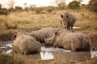 Full-Day Big Five Game Drive in Kruger National Park Photos