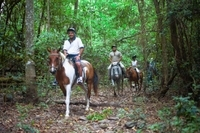 Full-day Horse Riding and ATV Tour from Cairns Photos