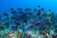Glass Bottom Boat Cruise at Buccoo Reef Photos