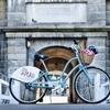 Halifax Shore Excursion: City Bike Tour