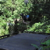 Cairns Minjin Jungle Swing