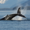 Juneau Whale-Watching Adventure