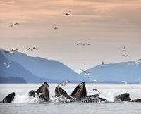 Juneau Whale-Watching Cruise and Salmon Hatchery Tour Photos