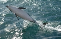 Kaikoura Whale and Dolphin Overnight Tour from Christchurch Photos