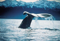 Kaikoura Whale Watch Tour from Christchurch including TranzCoastal Rail Journey Photos