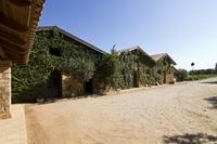 Katakolon Shore Excursion: Private Wine-Tasting Tour of Mercouri Estate Winery