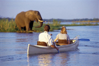 Kayak Safari on the Zambezi River with Transport from Livingstone