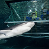Kelly Tarlton's Sea Life Aquarium Entry Ticket