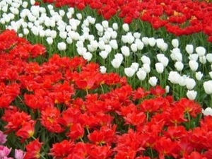 Amsterdam Super Saver 1: Keukenhof Gardens Day Trip and Amsterdam City Tour Photos