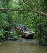 Kuranda Rainforestation Nature Park Photos