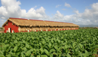 La Romana Cigar Factory Tour from Punta Cana Photos