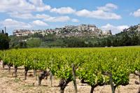 Les Baux de Provence Tour from Avignon: Provencal Wine and Olive Oil Photos