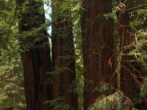 Alcatraz Tour plus Muir Woods, Giant Redwoods and Sausalito Day Trip Photos