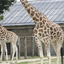 London Zoo - London