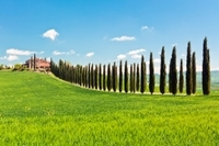 Luxury Tuscan Villa Experience Including Lunch and Wine Tasting Photos
