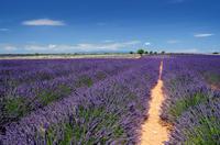 Marseille Shore Excursion: Private Aix-en-Provence and Valensole Lavender Tour Photos