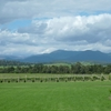 Yarra Valley Wineries and Puffing Billy Steam Train Day Tour from Melbourne