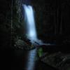 Mt Tamborine National Park 4WD Nocturnal Rainforest and Glow Worm Tour