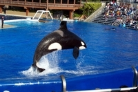 Multi-Day Trip from Anaheim to San Diego and Admission to SeaWorld Photos